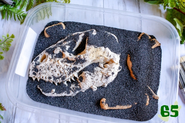 a salt dough t-rex skull in a box of sand for a fun dino dig!
